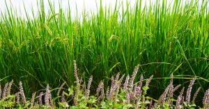 【野草生活】一起來認識原生野花:12款台灣原生野花,小小花草有大大用途!
