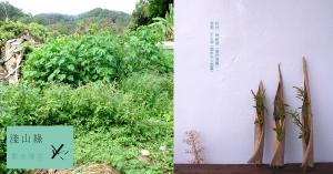 【淺山綠專欄|散步理花02】雜野莧の花姿態