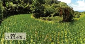【黃宇君專欄】小滿芒種間:除的不只是草,還有對感恩的回饋