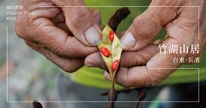 【台東長濱】竹湖山居:從一顆種子開始,復育整片山林!遁入數萬棵樹的擁抱下遠望山與海