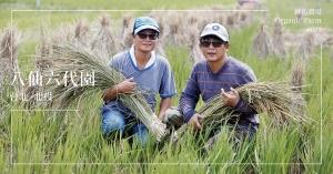 【台北北投】八仙六代園:插秧、播種、收割,浪漫農夫一步步寫下這塊土地的故事
