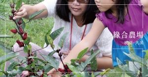 【桃園大溪】綠合農場:在良田間種下一顆顆健康的種子,建構起美好的親子關係