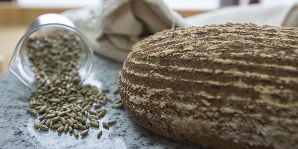 格蘭山麥 Albion Wheat