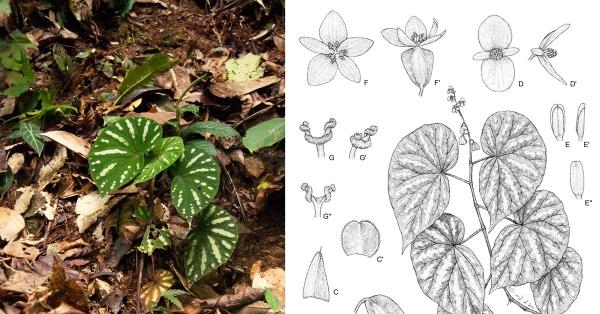 植物繪師:以點線精準的科學視野,用針筆提煉植物的一生