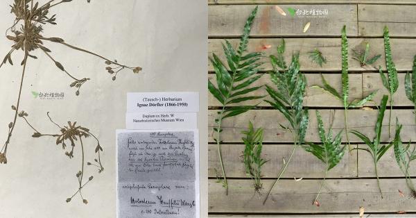 植物標本館研究員:流傳百年的植物標本,就從植物學家的野外採集開始