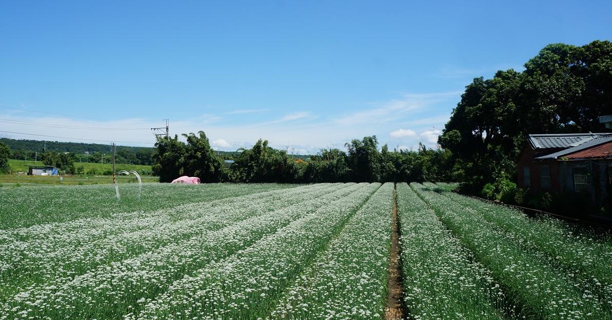 【大溪】香草野園:中寮島上的香草祕境