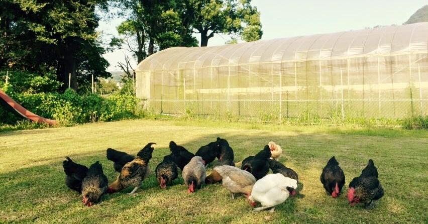 【大溪】淼焱苗有機農場:歡迎你來放空的樂活果園