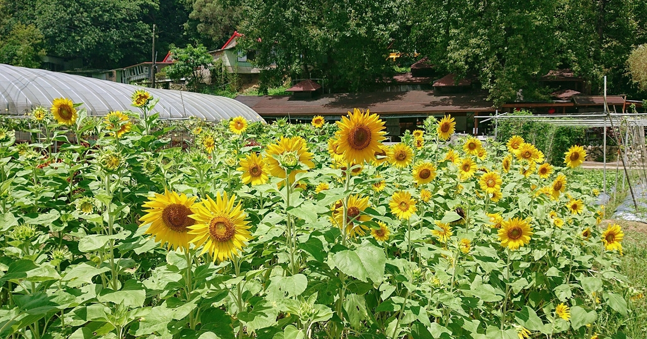 【內湖】向日有機農場:帶來療癒與希望的新樂園