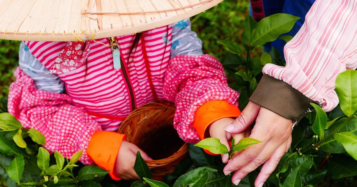 【坪林】綠光農園:啜飲一口來自土地的滋味