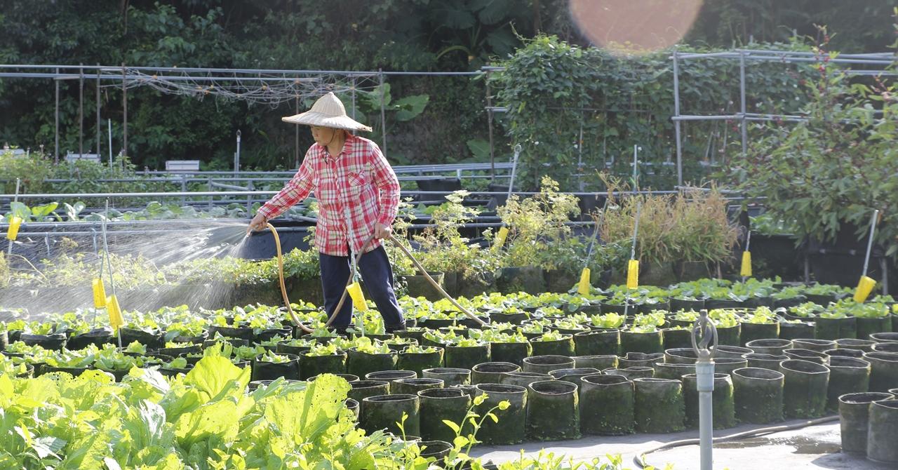 【內湖】農驛棧有機農場:白石湖社區的草莓饗宴