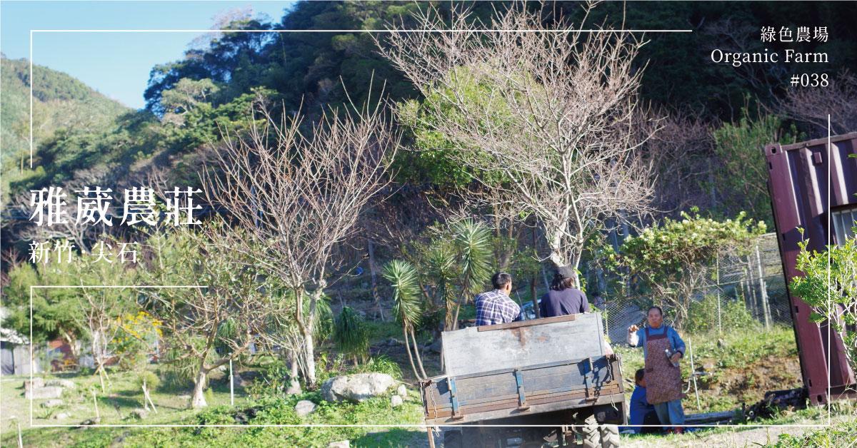 【新竹尖石】雅葳農莊:部落有山,斜坡有花,這裡有家