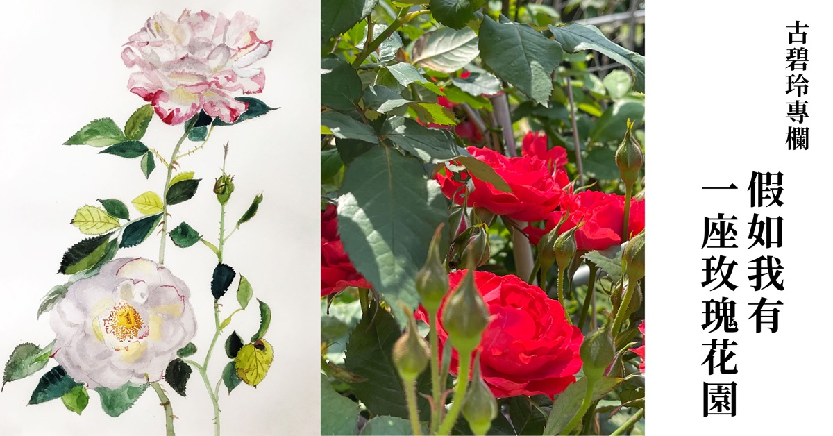 【古碧玲專欄|花草樹木.亂七八招 04】假如我有一座玫瑰花園