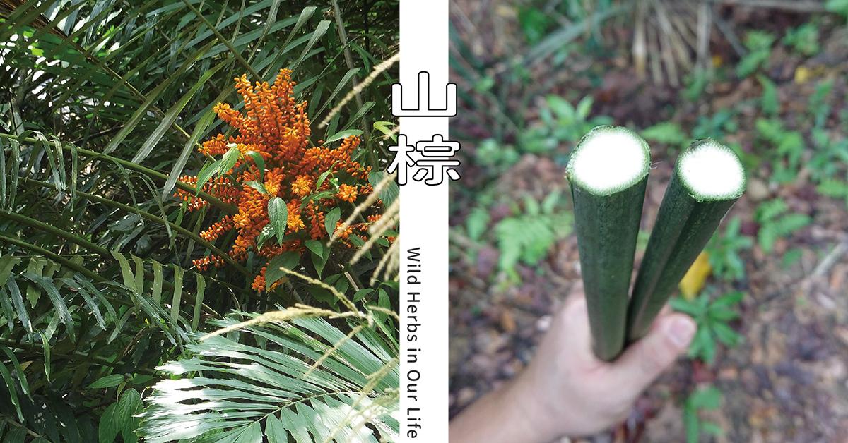 左圖來源:lienyuan lee, CC BY 3.0, via Wikimedia Commons